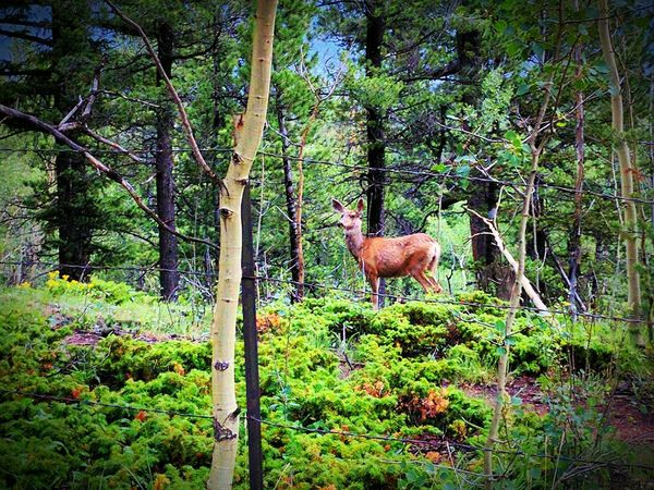 Nature Animal Themes One Animal Outdoors Beauty In Nature Deer ♥♥ Beauty Around Me Colorado Native Do You See Me? Google Pixel XL
