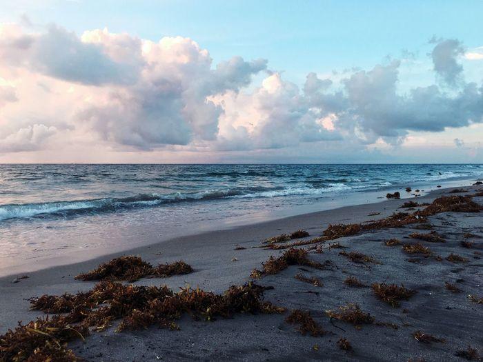Seaweeds on beach