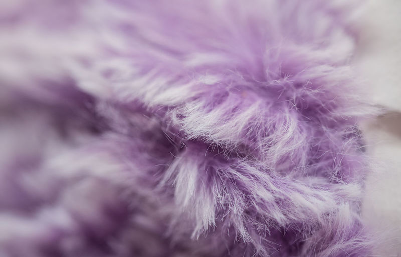 Wool Textile Softness Indoors  Purple Close-up Art And Craft No People Creativity Selective Focus Craft Backgrounds Fluffy Fragility Vulnerability  Full Frame Studio Shot Animal Hair Hair White Color