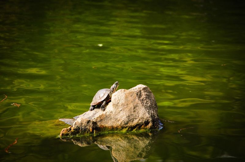 Side view of turtle on rock