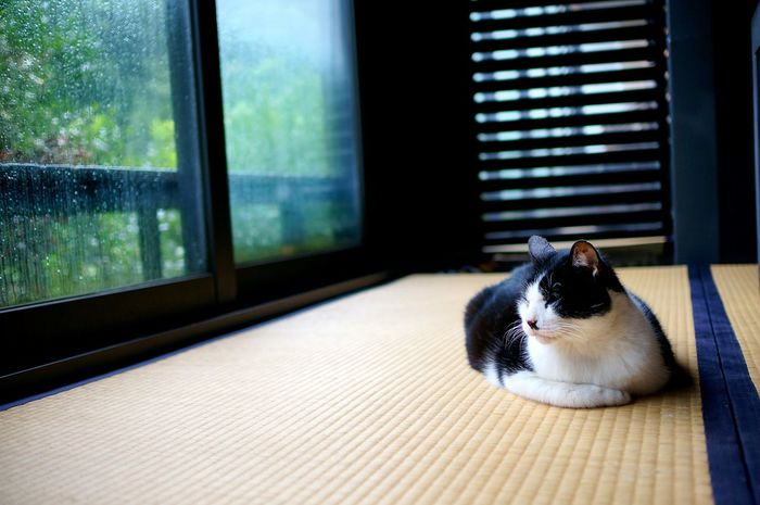 Cat Alone Time Alone Cat Animal Cute Cat Silence Enjoy Life Nice Day Sony Nex6 Taking Photos Relaxing Hey  Somewhere Life Is Good Quiet Moments Peaceful Somewhere I Remember Find Myself Pets One Animal Day No People