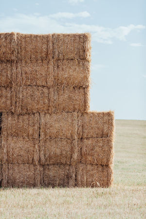 Agriculture Farm Farm Life Harvest Harvesting Hay Livestock Stack Straw Wheat Wheat Field