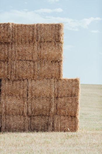 Agriculture Farm Farm Life Harvest Harvesting Hay Livestock Stack Straw Wheat Wheat Field
