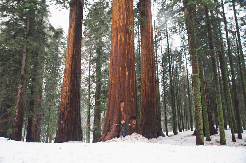 California Curly Hair Forest Girl Mountains Nature Road Roadtrip Sequoia Sequoia National Park Snow Tree Love Trees