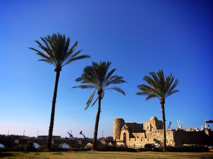 Palm trees and the Sidon Sea Castle in Saïda Traveling Lebanon