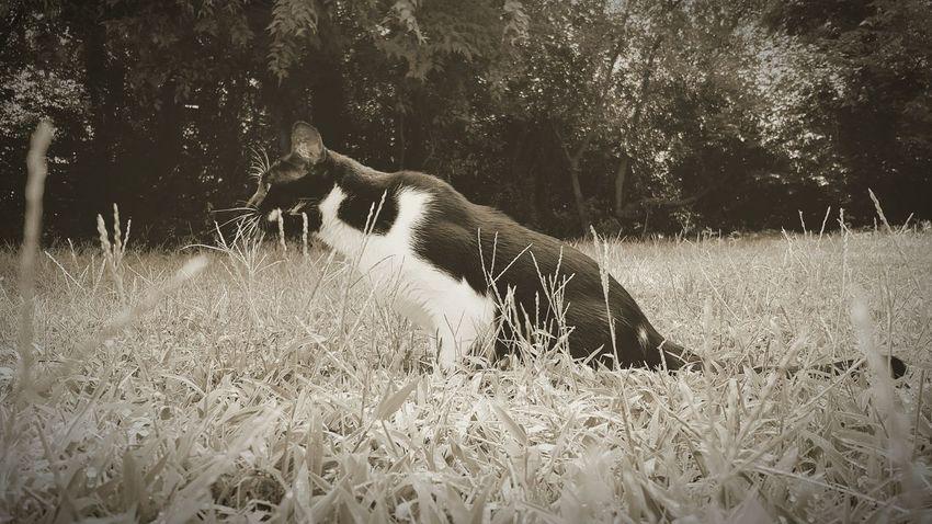 Indoor cat in the outdoor world.