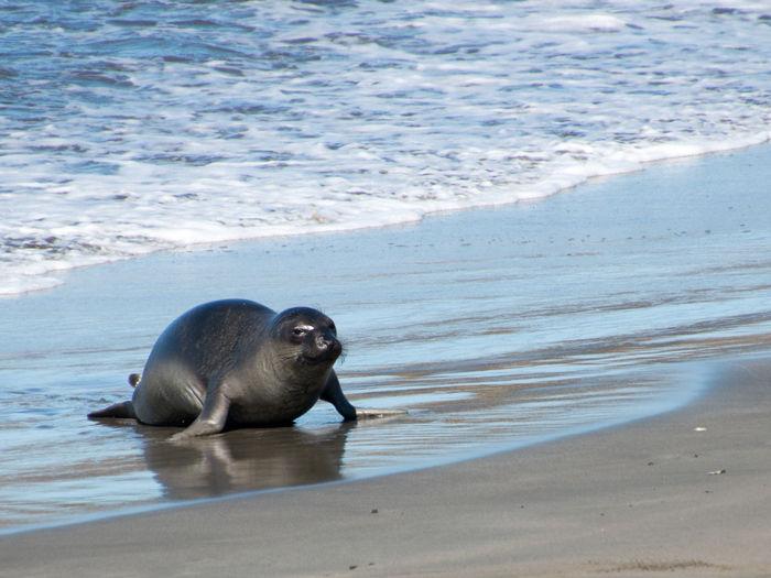 High angle view of sea lion on beach