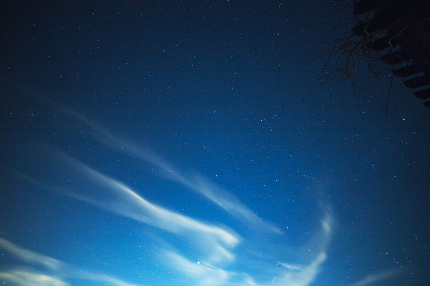Soft clouds in dark night sky with stars above. Sky Beauty In Nature Low Angle View Blue Night Star - Space Astronomy Scenics - Nature No People Nature Tranquility Space Tranquil Scene Star Outdoors Tree Plant Galaxy Weather Forecast