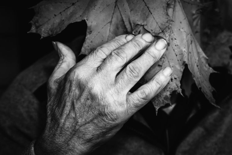 Cropped hand touching leaf at night