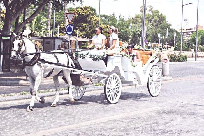 Horses Wedding Love Romantic