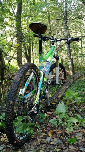 MTB Trail Ride Trail Forest