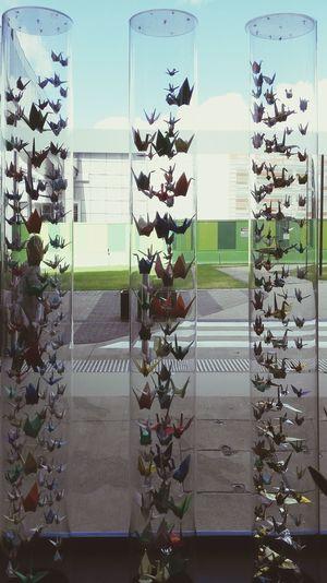 Paper Cranes 千纸鹤 at RNSP by FeBird