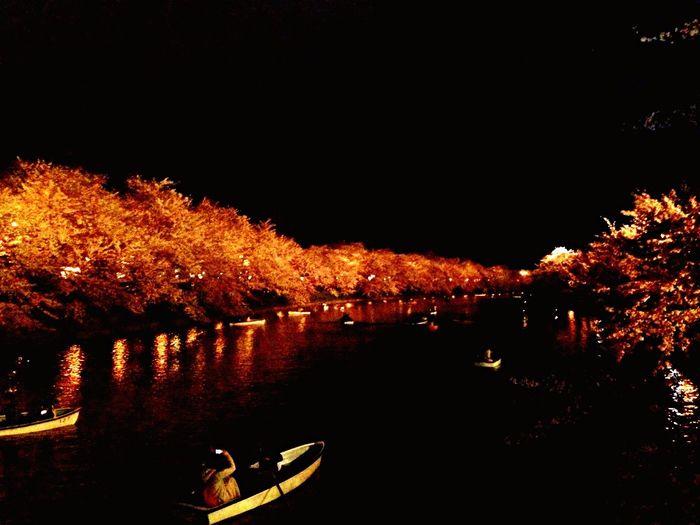 Nature On Your Doorstep Japan EyeEm Japan Japanese Cherry Blossom Tree Japanese Festival Moat First Eyeem Photo