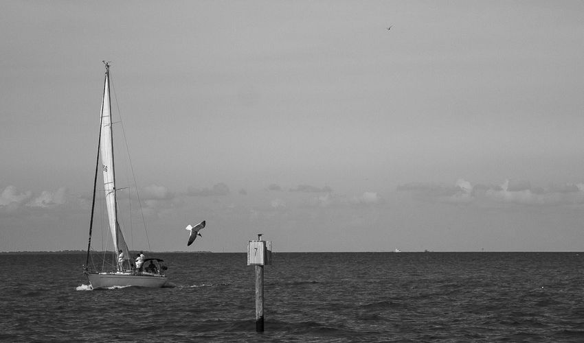Men sailing on sea against clear sky