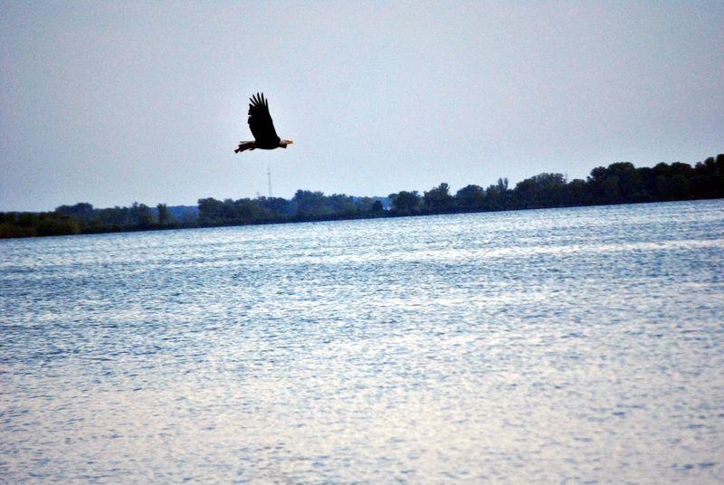 Eagle Eagles Eagle Portrait Eaglephotography Eagle In Flight