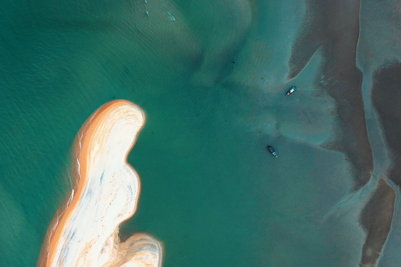 Aerial View Animal Animals In The Wild Beach Beauty In Nature Day High Angle View Land Marine Nature No People One Animal Outdoors Scenics - Nature Sea Sea Life Sunlight Turquoise Colored Water
