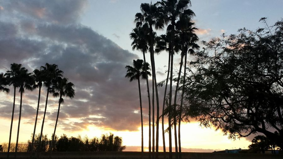 The KIOMI Collection Sunrise_sunsets_aroundworld Taking Photos Palm Trees No Location Needed Light And Shadow Tadaa Community No People