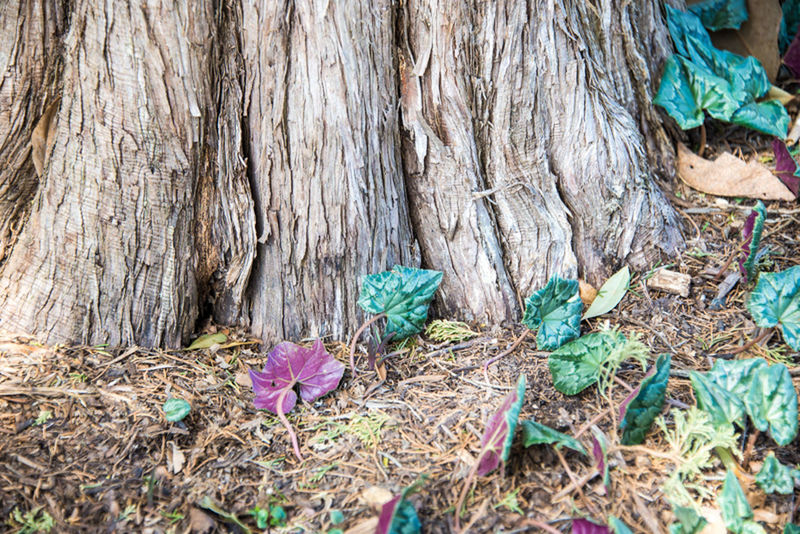 Abundance Botany Change Childhood Close Up Close-up Day Detail Focus On Foreground Fragility Growing Hobbit House Leaf No People Plank Rusty Selective Focus Textured  Tree Wood Wood - Material Wooden
