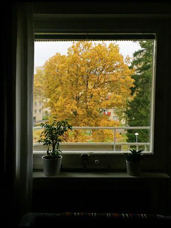 Autumn Colors HomeSweetHome🏠 Colorfulfall Colorfullautumn Myview Mywindow Homewindow Swedenhöst Höst HöstiSverige
