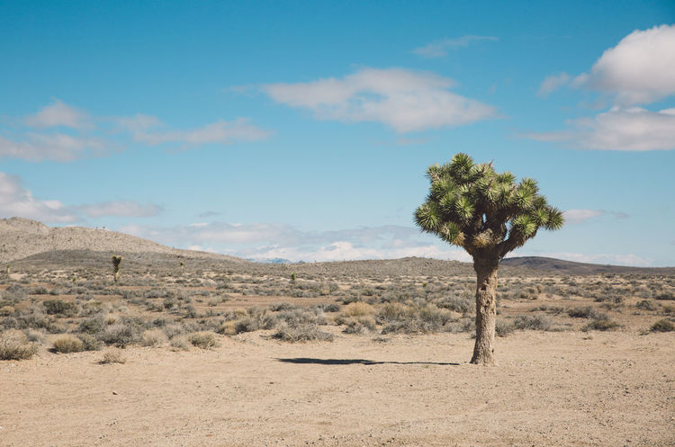 Arid Climate Arid Landscape Beauty In Nature Cloud - Sky Day Death Valley Death Valley National Park Desert Desert Joshua Tree Landscape Nature Nature No People Outdoors Road Roadtrip Scenics Sky Tranquil Scene Tranquility Tree The Great Outdoors - 2017 EyeEm Awards Been There. Lost In The Landscape
