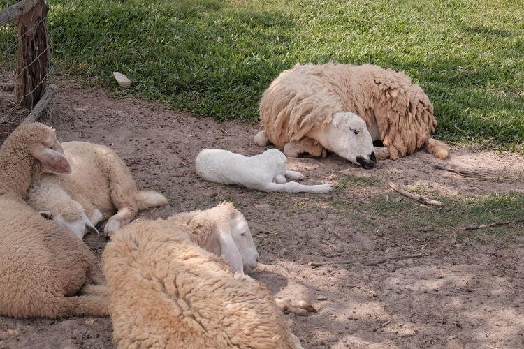 Mammal Group Of