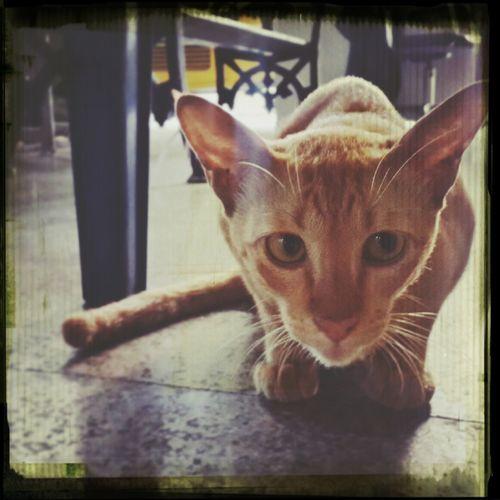 Hide And Seek Kitty Cat