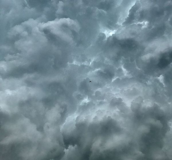 A little bird amongst the massive clouds Cloud - Sky Cloudscape Backgrounds Storm Cloud Nature