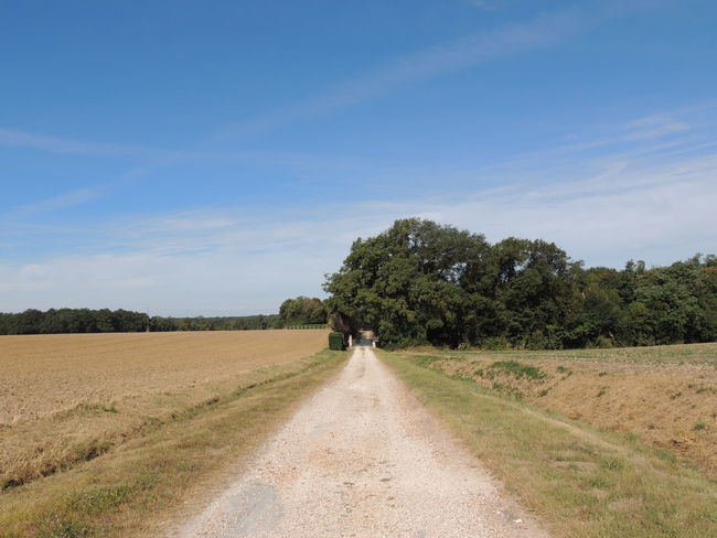France Loire Touraine Beauty In Nature Day Direction Dirt Dirt Road Environment Field Growth Land Landscape Nature Non-urban Scene Outdoors Plant Road Scenics - Nature Sky The Way Forward Tranquil Scene Tranquility Tree