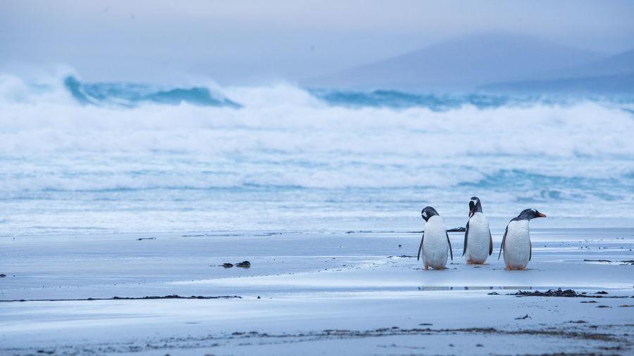 Swan on sea against sky