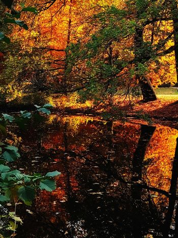 Autumn Mood Beauty In Nature Beautiful Day Fall Fall Beauty Orange Color Autumn colors Autumn Fall Colors Autumn Beauty Urban Nature Reflection Sunset Backgrounds Full Frame Multi Colored Abstract Pattern Close-up Autumn Collection Idyllic Calm Tranquility Tranquil Scene