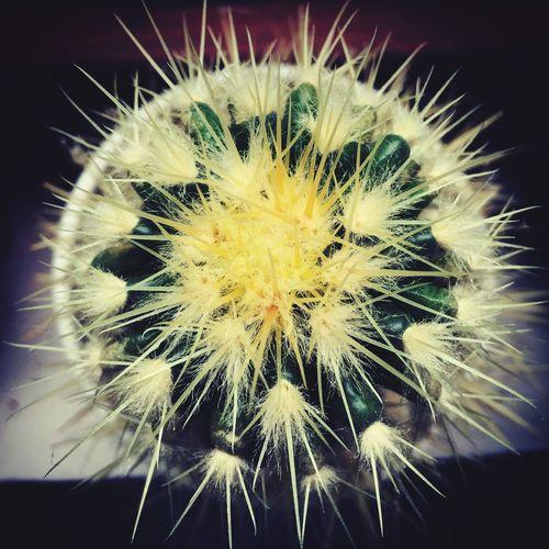 Cactus Cactuslover Spikes Spike
