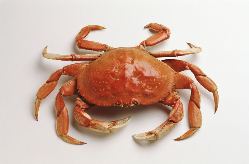High angle view of crab over white background