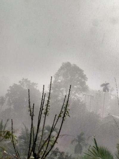 Rainy Days Alone Tree Sky Love💙 No People 😇😇😇 No Crowd :)
