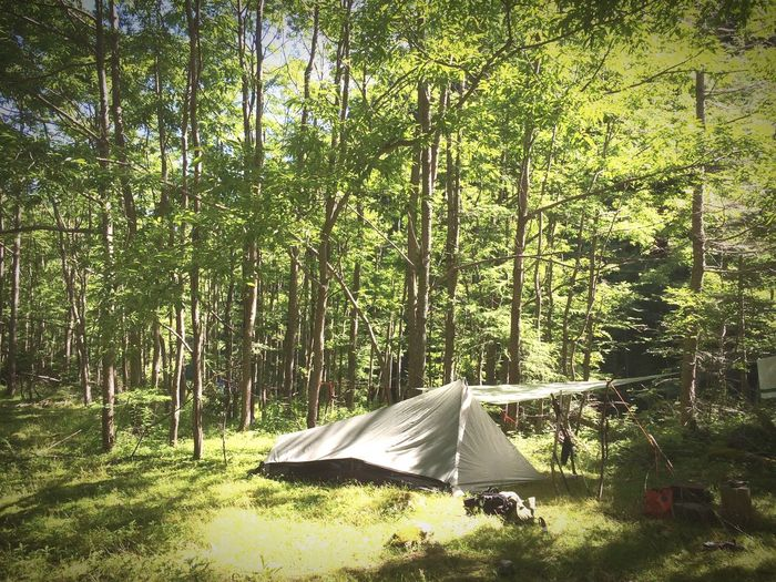 In the deep forest... With wonderful nature. First Eyeem Photo Camping Tent Forest