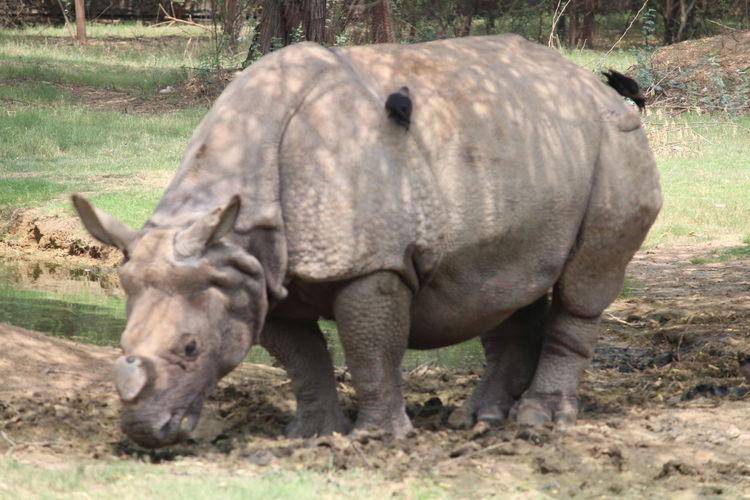 Mighty Rhino