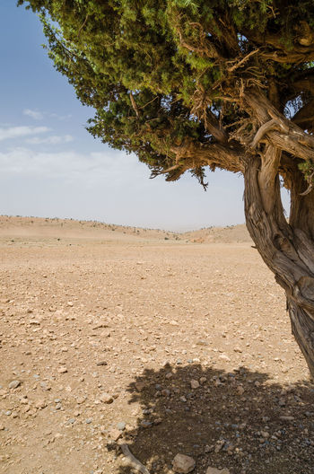 Arid Climate Beauty In Nature Day Growth Landscape Nature No People Outdoors Sand Scenics Sky Tree Tree Trunk