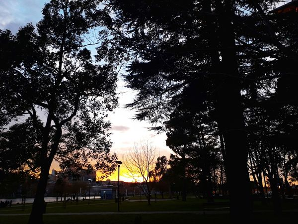 Sunrise Nature Beauty In Nature Beautiful #Georgia #photography #Nature  #JustMe #beautiful #like #post #love #simple #enjoy #followback #photo #likeforlike #likemyphoto #qlikemyphotos #like4like #likemypic #likeback #ilikeback #10likes #50likes #100likes #20likes #likere #beautiful #follow #f4f #followme #TagsForLikes #TFLers #followforfollow #follow4follow #teamfollowback #followher #followbackteam #followh #recently #FollowMe Followme Folllow4follow Like4like Likemyphoto Like Tree Silhouette Sunset Low Angle View Outdoors No People Nature Beauty In Nature Day Sky
