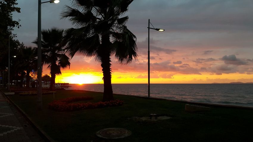 Sunset Sea Tree Beach Yalova Flowers Yalovasahili Palm Tree