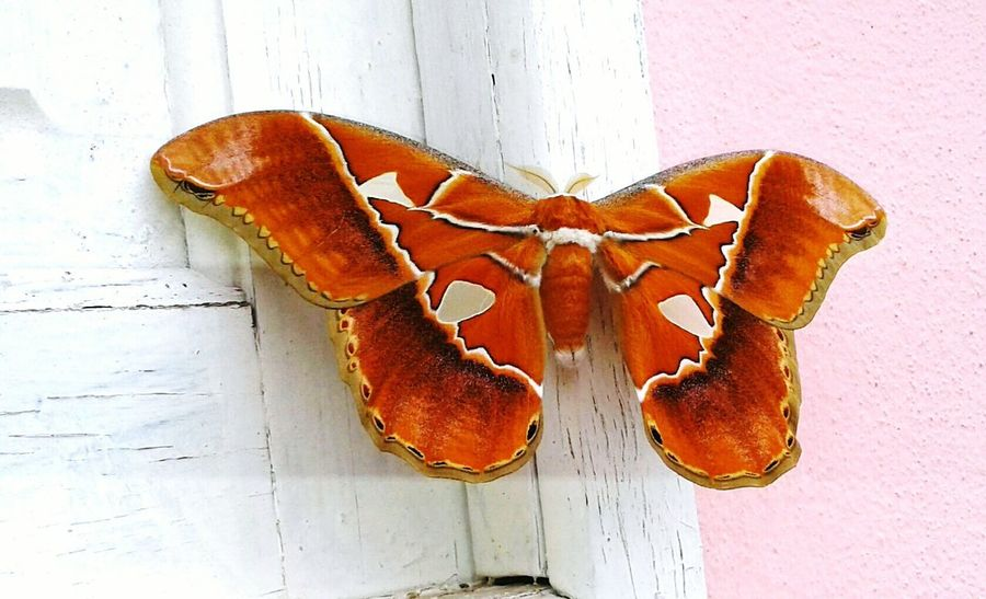 Nature Beauty In Nature Butterflys Butterflycatchers Butterfly Nature Macro No People Majestic Windows