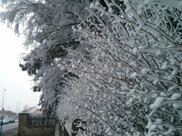 Winter Arras close up Tree Hiver Winter Trees Closeup Blanc White Neige ❄ Snow ❄ Frozen