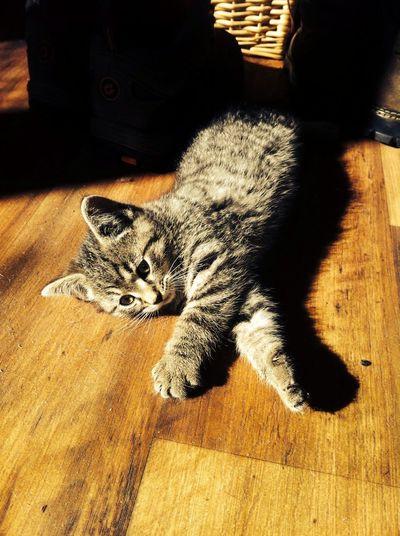 Eman chillin Cat Animals Love Relaxing