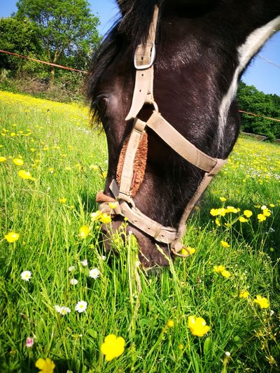 buttercups Yearling Piebald Mare Beauty In Nature Beautiful Horse Tree Water Sky Green Color Plant Farmland Stalk Flower Head Petal Blooming First Eyeem Photo