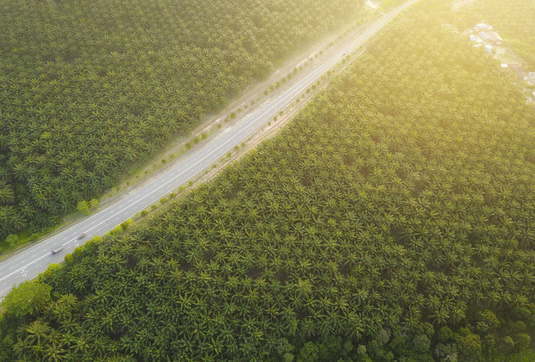 aerial view of palm plantation Melaka Aerial Agriculture Beauty In Nature Day Environment Field Grass Green Color Growth High Angle View Land Landscape Nature No People Outdoors Palm Plantations Plant Road Rural Scene Scenics - Nature Tranquil Scene Tranquility Transportation