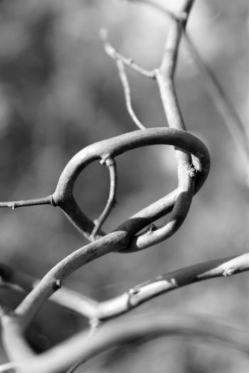 Growing in Circles... Canon Canonphotography Rebelt5i Close-up Beauty In Nature TwistedWood Tree_collection  Blackandwhite Ilikeit Still Life StillLifePhotography