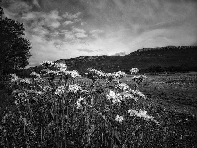 """"""" No sé si soy una persona triste con vocación de alegre, o viceversa, o al revés. Lo que sí sé es que siempre hay algo de tristeza en mis momentos más felices, al igual que siempre hay un poco de alegría en mis peores días. """" Benedetti Clouds And Sky Bnw Bnw_collection Bnw_captures Bnwphotography Bnw_shot Flowers EyeEm Nature Lover Bnwcollection Ushuaïa Parque Nacional Tierra Del Fuego Tierradelfuego"""