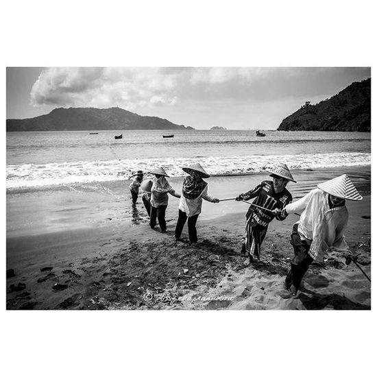Holopis kuntul baris Trenggalek Pantaicengkrong Eastjava Teamwork Fisher Beach BeautifulIndonesia INDONESIA 1000kata Blackandwhite Asiangeographic Nationalgeographic Instalike Instagram Instagood Instadaily Photooftheday