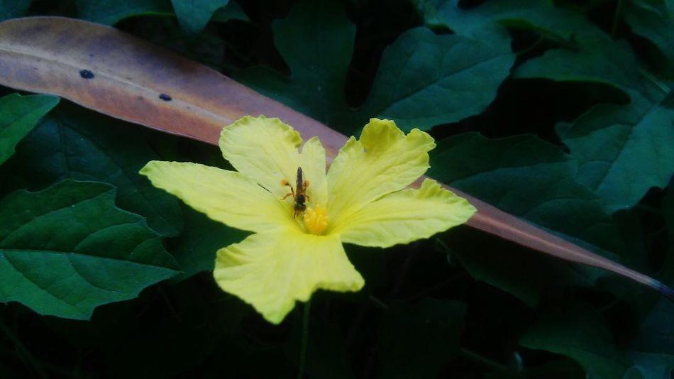 Bugs And Flowers Secret Gardens Flowers,Plants & Garden Taking Photos Closeupshot Showcasedecember