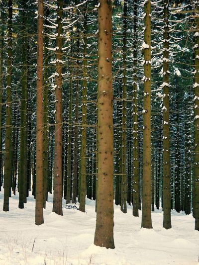 Beauty In Nature Cold Temperature Forest Nature Scenics Snow Tree Winter