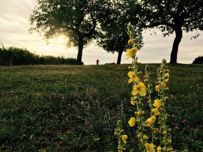 Run Away Beauty In Nature Field Flower Grass Green Idyllic IPhone IPhoneography Non-urban Scene Run Sunset Trees Wilde Yellow Yellow Flower