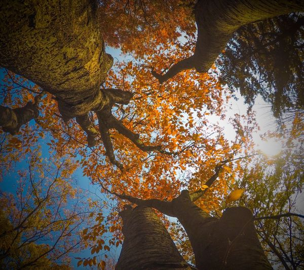 Tree Autumn Leaf Nature Low Angle View Beauty In Nature Day Rock - Object Outdoors Change Tree Trunk Branch No People Tranquility Growth Scenics Tranquil Scene Forest Sky